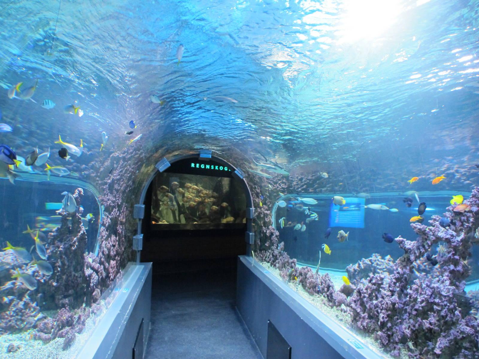 обитатели Бергенского аквариума