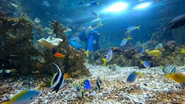 Бергенский аквариум
