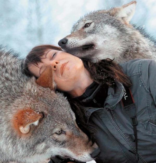 В норвежском Заполярье можно переночевать с волками